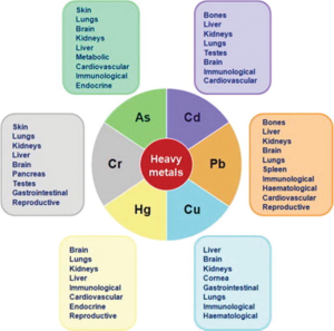 heavy metals and health